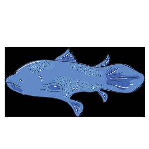 生きた化石の古代魚シーラカンスのイラスト