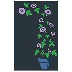 すくすく育った紫陽花のアイキャッチ