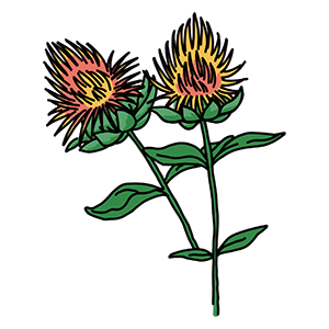 紅花のイラスト